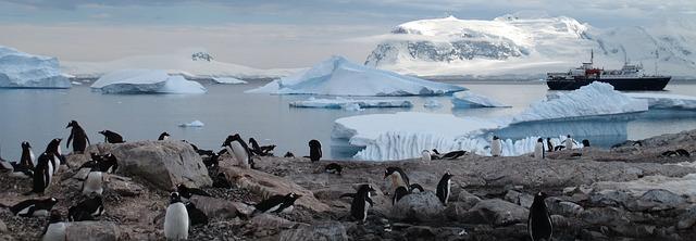 kolonie tučňáků